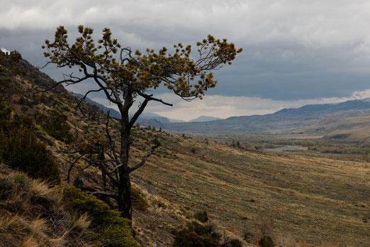 South Fork, Wyoming, USA, Nature, Landschaftsfotografie