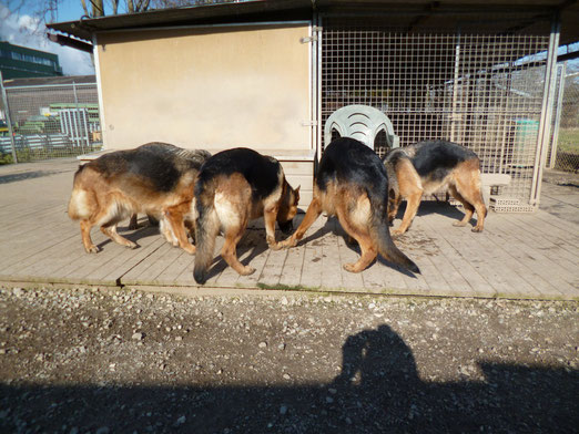 Meine Hunde beim Mittagessen