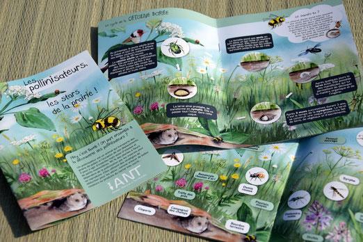 livret pédagogique, ludique, pollinisateur, pollinisation, bourdon, abeille, abeille solitaire, cétoine dorée, papillon, machaon, prairie