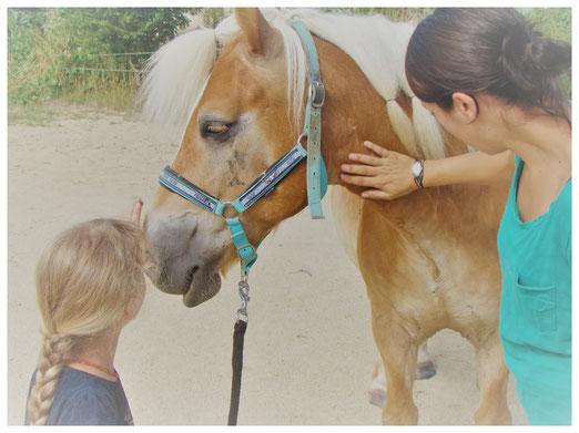 séances d'équithérapie en Vendée (85) et Loire atlantique (44), psychomotricité avec le cheval, équithérapeute