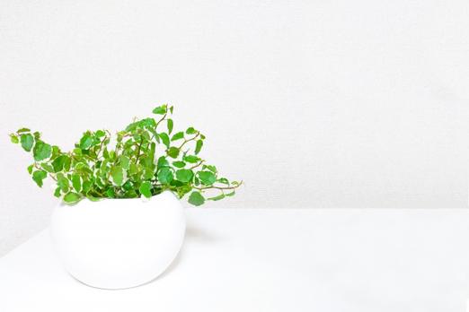 電卓とボールペン。色とりどりの付箋。観葉植物のグリーンのつる。