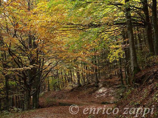 Foresta di Campigna nei pressi di Poggio dell'Agio Grosso