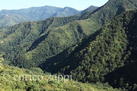 Vista sulle pendici della RNI di Sasso Fratino da Campominacci