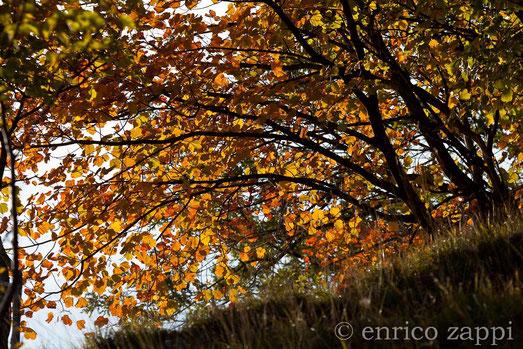 acero, rosso, autunno
