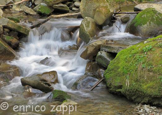 Particolare del torrente che transita nei pressi di Camaldoli (AR)