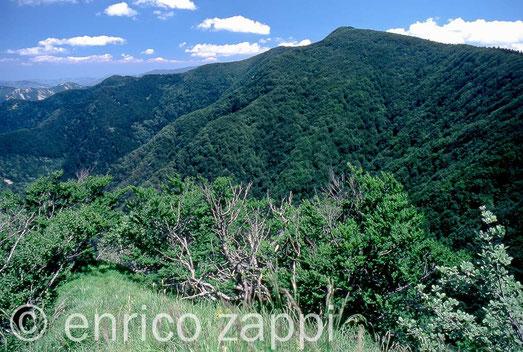 La Foresta della Lama da Monte Penna