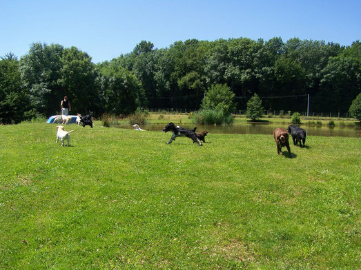 Deux étangs pour le plaisir de nos chiens !