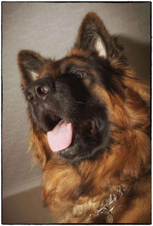 Arthur - Foto 6