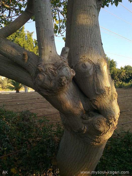 Удивительные деревья 6