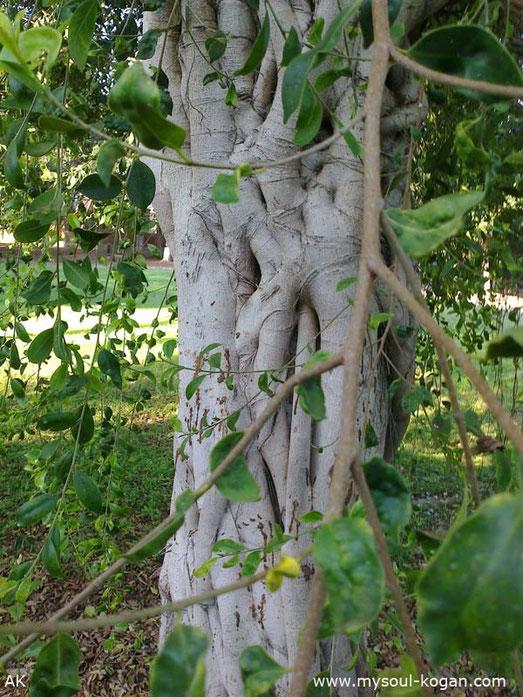 Удивительные деревья 5
