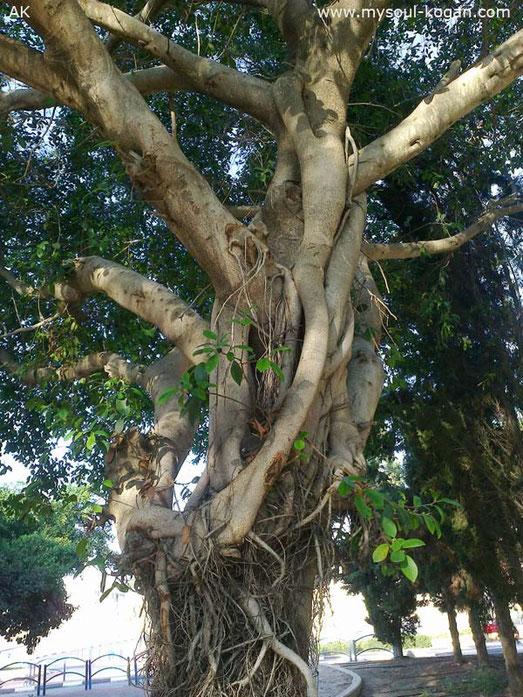 Удивительные деревья 13