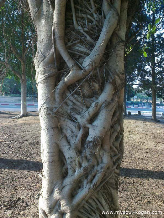 Удивительные деревья 3