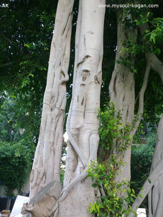 Удивительные деревья 2