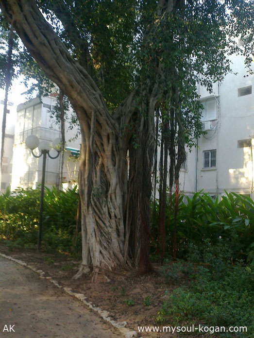 Удивительные деревья 15