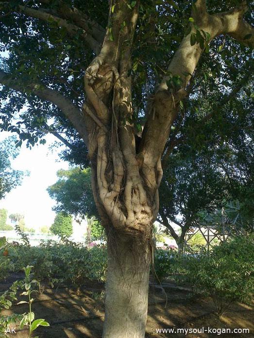 Удивительные деревья 11