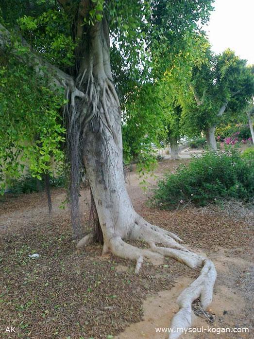 Удивительные деревья 8