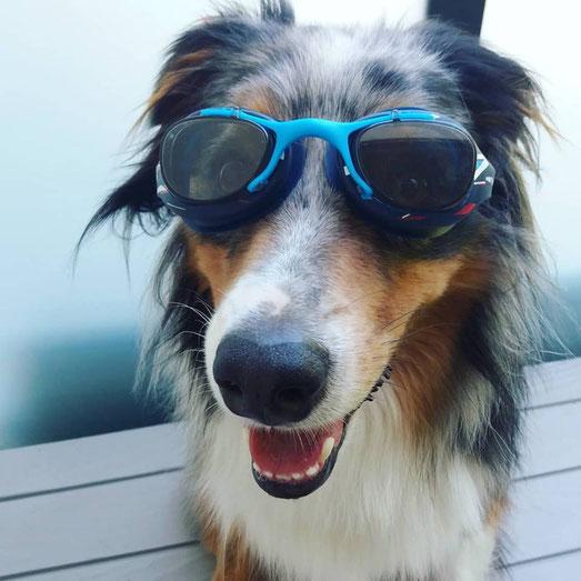 chien avec des lunettes