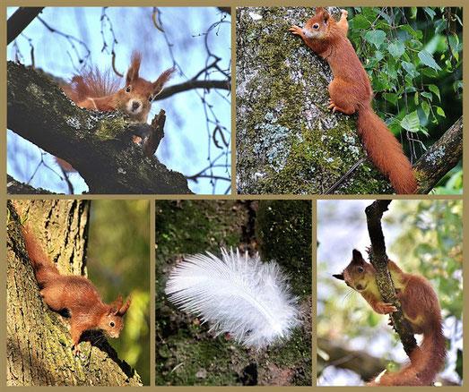 Federbotschaften und Eichhörnchen