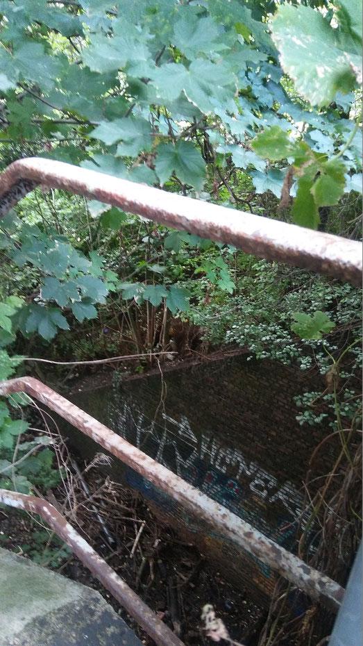eingang zum schellfischtunnel,bäume, schiefe ebene, geländer