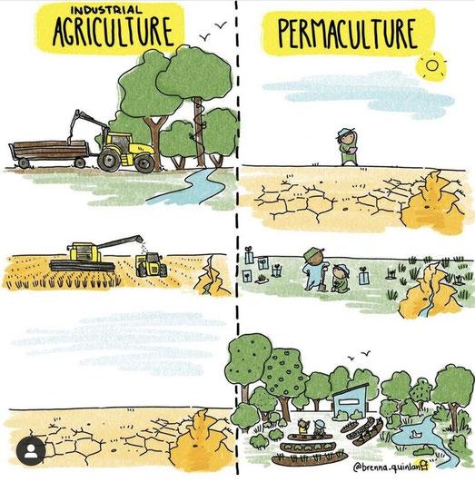 Permakultur in einem Bild erklärt