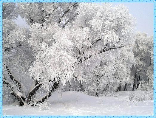 Голые поварихи на снегу