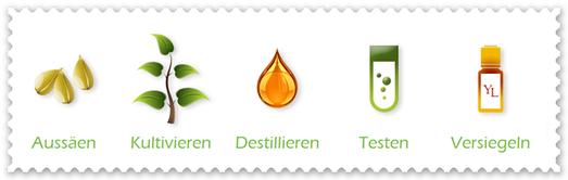 Seed-to-seal Aussäen Kultivieren Destillieren Testen Versiegeln