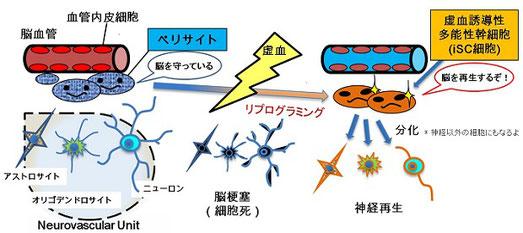 平成27年、兵庫医科大学 先端医学研究所の教授によって発見されました。