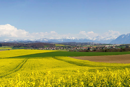 Radreise, Rapsfeld Schweiz