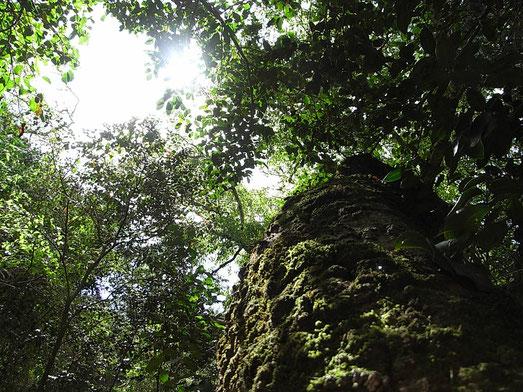 喜びの木 ホワイトペア