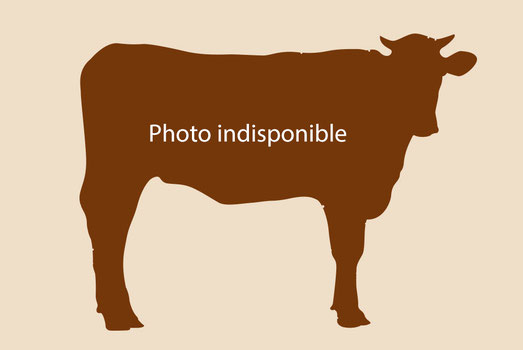 Photo indisponible