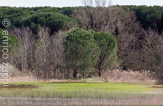 Bardello, zona umida a ridosso della Pineta di S.Vitale
