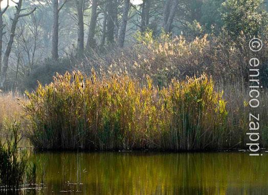 Ortazzo, altro ambiente naturale di particolare interesse naturalistico.