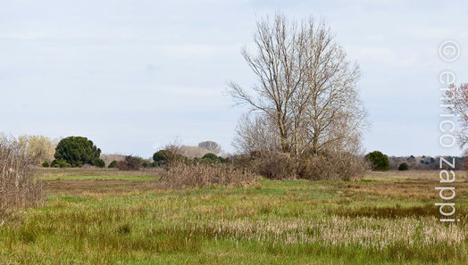 Il Bardello, un ambiente attiguo sia alla Valle Mandriole che alla Piallassa della Baiona (RA).