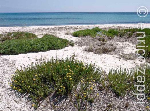 Spiaggia della Salina con la flora spontanea.