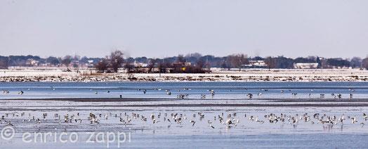 Uccelli in saline dopo una nevicata