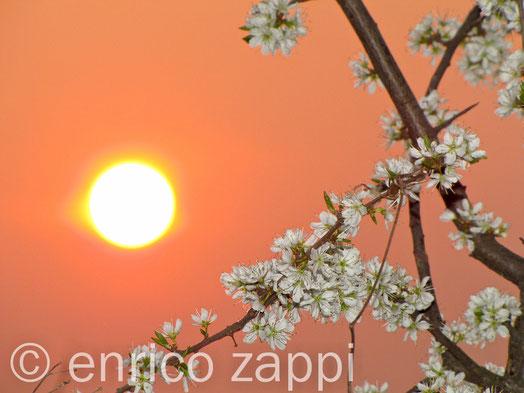 Il sole tramonta fra rami di un biancospino.