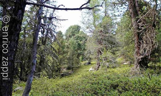 Il bosco sopra Acerreto