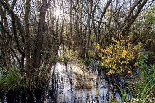 Interno del bosco allagato