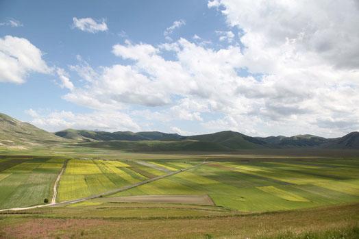 I campi di lenticchie cominciano a fiorire nel Pian Grande, qui visto dalle pendici di Castelluccio di Norcia.