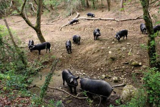 L'ACCOB, la SEPANSO 64 soutiennent un tel élevage mais en respectant toutefois la protection d'un cours d'eau, sa bonne qualité. Des éleveurs concurrents savent le faire, pourquoi pas M. Maurin ?