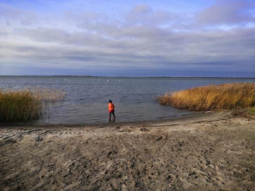 An der Boddenküste, nur ein paar Minuten vom Familienhotel entfernt