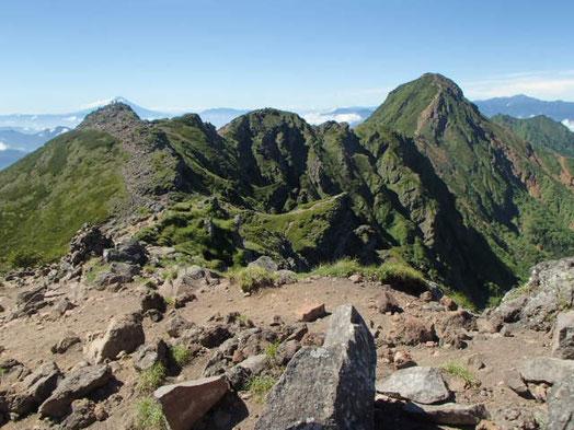 南八ヶ岳 高山植物 ガイド