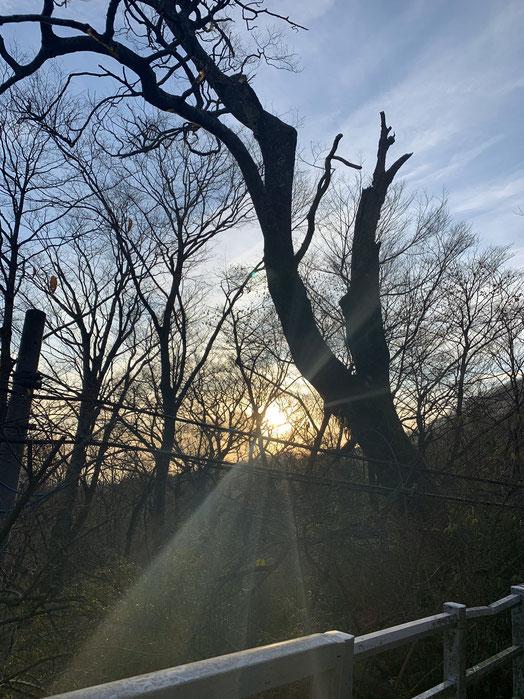 森、日の出