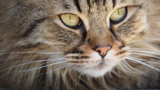 Katzen, BARF, barfen, Katze Vreden, natürliche Behandlung von Katzen