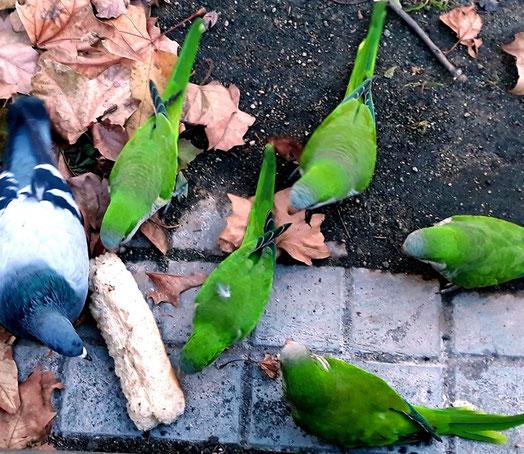 Барселона - город зеленых попугаев. Интересные факты о Барселоне