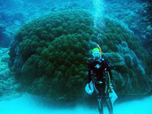 サンゴ礁の海中調査風景。200才の大型サンゴと私。