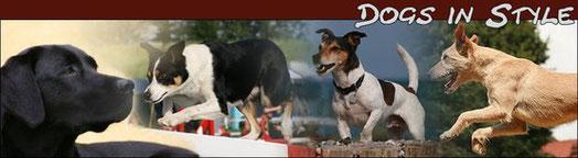 ** Ein Hund - Ein Moment - Ein Foto ** _ hier geht es zu meiner Seite der Hobby-Fotografie _