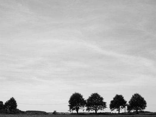 Mecklenburgische Seenplatte, Müritz, Schwarz-Weiss, Müritz-Rundweg, Wandern, Radfahren, Monocrome, Fotokunst, Kreative Fotografie, Minimalismus