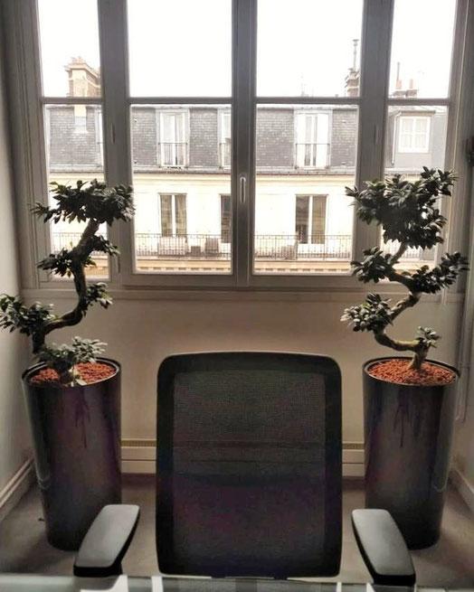 Paysagiste d'intérieur: location de plantes pour vos bureaux à Paris