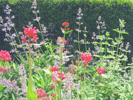 inpiration jardins de couleurs , jardin coloré
